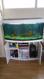 Juwel vision 260 fish tank and stand free local delivery