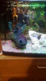 Sell aquarium