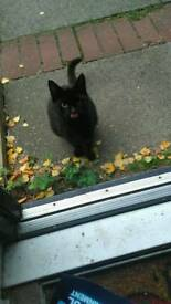 Found little black female cat