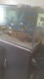 Wanted 6ftx2ftx2ft bare fish tank