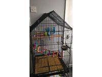 2 * Budgies with Large Cage on Stand