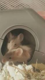 Fancy baby mice