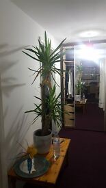 1 bedroom semi detached 2 years old swapping for 1 bedroom in leicester