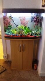 Tropical fish tank full set up with fish and own stand