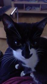 Missing cat Black ad white .