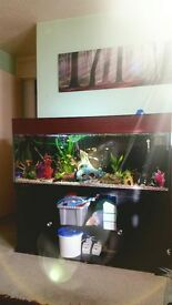 4ft 6 aquarium full set up with cabinet excluding fish
