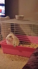 Male bunny with indoor cage