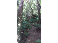 Beautiful Woodland with Large Hardstanding for Sale in West Wales