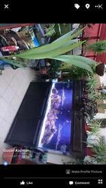 6ft marine fish tank