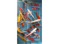 """koi for sale 10-12"""" for your pond"""