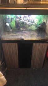 Fluval 125 2 & half foot tank with stand full set up