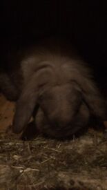 Beautiful rabbit with hutch