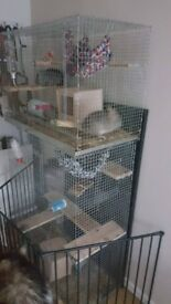 Penthouse Chichilla cage