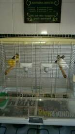5 X Canary Hens Plus Cage