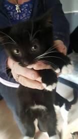Kittens £45 each
