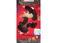 6 beautiful kittens for sale!!!💗( 1 boy left) xx