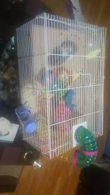 Hamster with his cage and playing ball