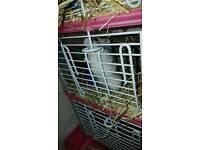 Little Female Hamster.