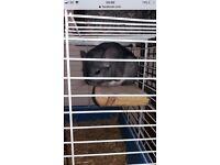 Chinchilla cage wanted