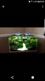Fish Tank Aquascaping Planted Aquarium