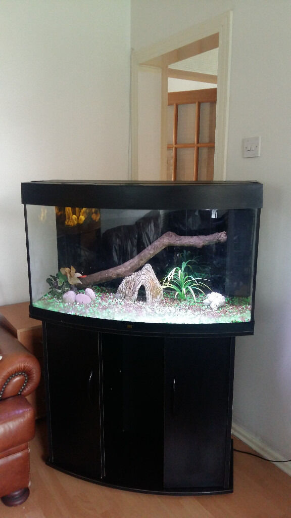 JUWEL FISH TANK AND STAND FOR SALE FULL SET UPin Salford, ManchesterGumtree - JUWEL VISION BOW FRONTED 180 LITER FISH TANK AND STAND FOR SALE FULL SET UP,,COMES WITH JUWEL BIO FILTER,WATER HEATER,LED LIGHTS,LARGE BOG WOOD,GRAVELS,STONE ORNAMENTS,BLACK BACKGROUND,PLANTS,,NICE AND CLEAN AND COMES WITH EVERYTHING YOU NEED FOR SET...