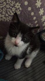 Gorgeous kitten 12 weeks old