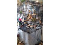 2 Blue male budgies and cage for sale.