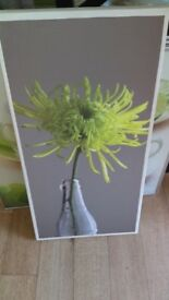 Canvas pic of lime colour flower