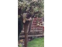 6 month old male cat missing from CAWSTON, RUGBY