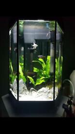 Fish Tank 20L