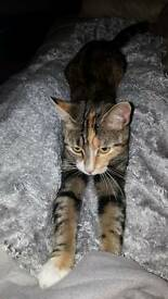 Female cat with all acessories for sale