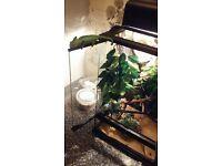 chameleon and set up