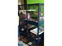 Savic Royal rat/rodent cage