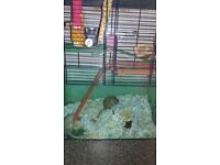 2 gerbils with cage