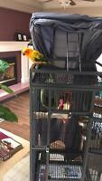 One year old sun conure