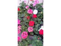 plants and flowers for sale