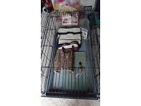 Guinea Pig / Rabbit Indoor Hutch and accessories
