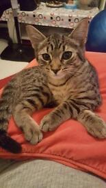 Friendly kitten for sale.
