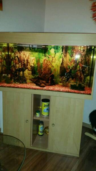 sch nes aquarium in stuttgart weilimdorf aquarium und aquaristikzubeh r g nstig ebay. Black Bedroom Furniture Sets. Home Design Ideas