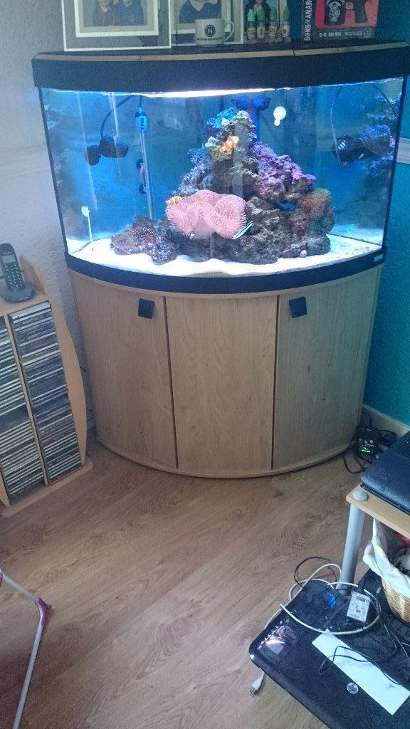 Fluval corner tank still for sale in corstorphine for Corner fish tank for sale