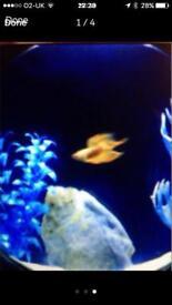 New designer fish aquarium