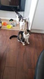 Two beautiful boys age 5 now rehomed