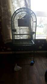 2 cocktails semi tame with large cage open to offers
