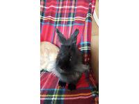 Girls rabbit
