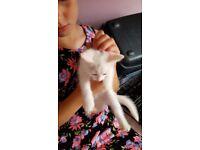 white girl kittens