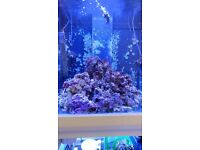 LIVE ROCK FOR MARINE AQUARIUM Approx 15 - 20 kg WITH CORAL ATTACHED. REEF