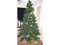 Christmas tree from cadbury garden centre
