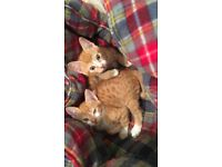 2 beautiful kittens for sale
