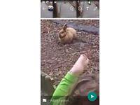 Stolen rabbit