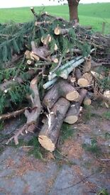 Free firewood wood logs trunks fire bonfire branches log burner